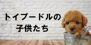 販売中の子犬